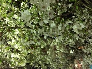s-写真 2015-04-04 23 16 14